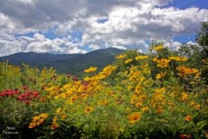 2015-8-5-flowers-mountains-a